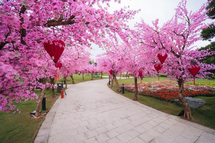 Lễ hội Hoa anh đào