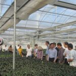 Đổi mới sáng tạo trong ngành sản xuất rau hoa quả
